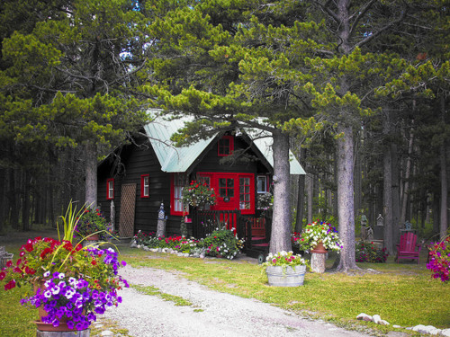 cabin, trees, and vintage image