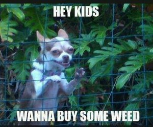 weed, dog, and funny image
