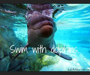 dolphins, swim, and bucket list image