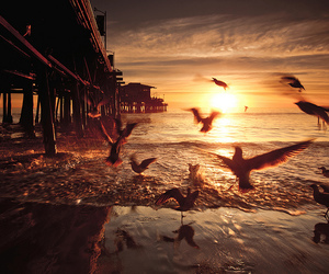 bird, sea, and beach image