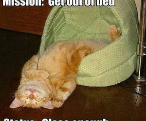 cat, funny, and bed image