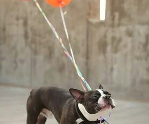 dog, balloons, and cute image