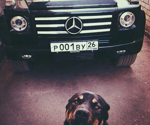 luxury and dog image