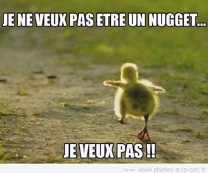 nuggets and humour image