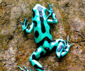 animal, frog, and nature image