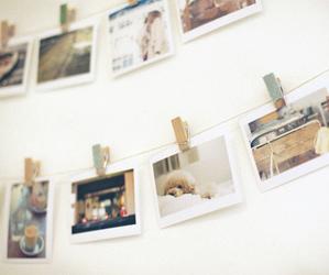 dog and wall image