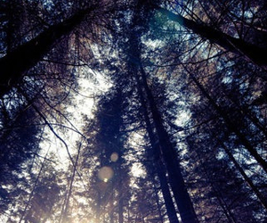 forest, trees, and light image