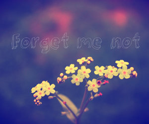 flowers, forget me not, and nots image