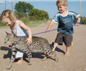 cat and kids image