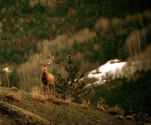 deer, indie, and mountain image