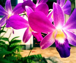 flower, orchid, and photography image