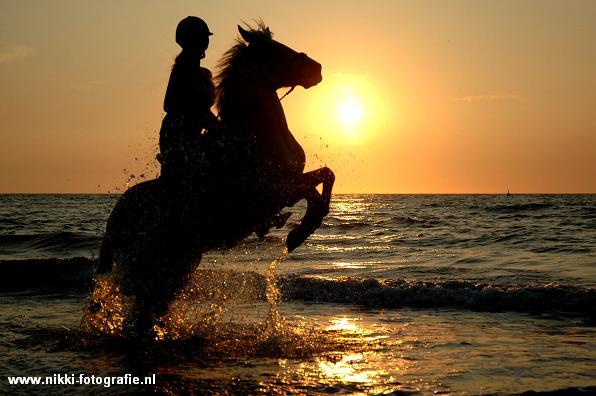 steigendes pferd zeichnung  vorlagen zum ausmalen gratis