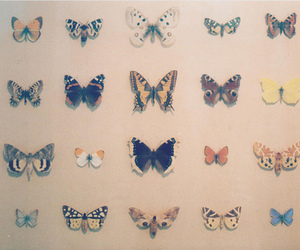 butterfly, vintage, and pretty image