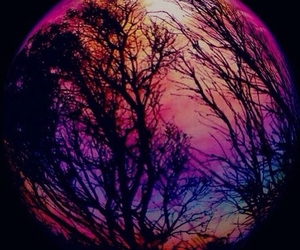 colorful, moon, and tree image