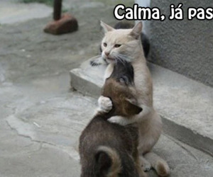cat, dog, and gatinho image