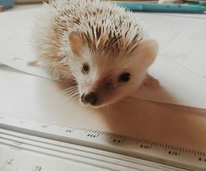 animal, hedgehog, and homework image