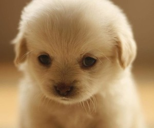 adorable, puppy, and omg<3 image