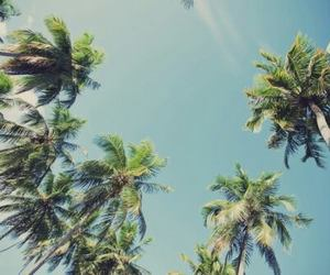 palms, summer, and sky image