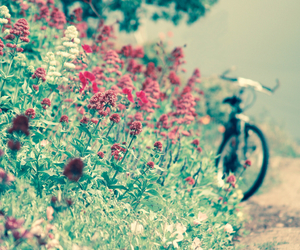 flowers, bicycle, and green image