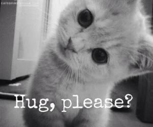 cat, hug, and cute image
