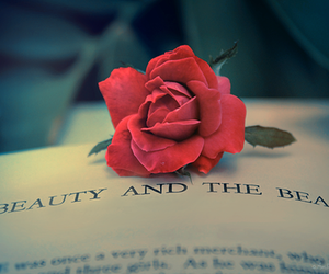 rose, book, and beauty and the beast image