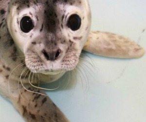 cute and seal image