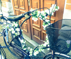 amsterdam, bikes, and flower image