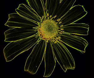 black, flower, and yellow image
