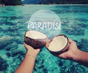 paradise, summer, and coconut image