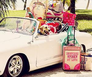 car, summer, and dog image