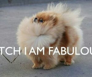 adorable, chien, and fashon image