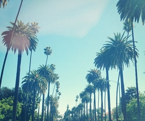 summer and palmtrees image