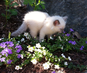 cat, flowers, and kitten image