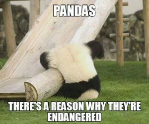 animals, funny, and pandas image