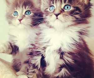 blue, cat, and cats image
