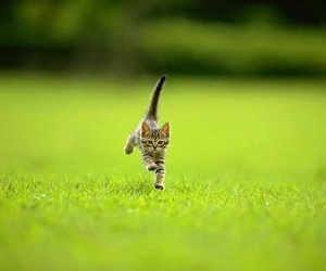 cat, grass, and running image