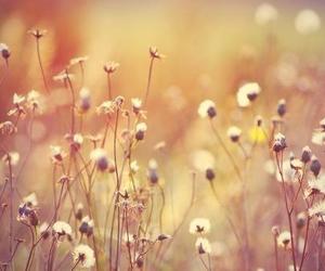 flower, spring, and vintage image