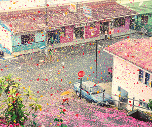 flowers, petals, and town image