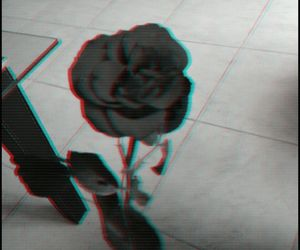 black, flower, and roses image