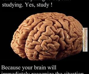 brain, funny, and lol image