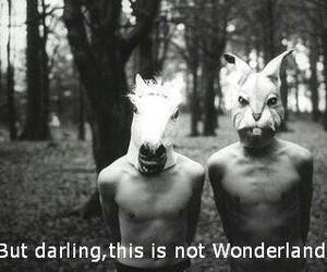 wonderland and darling image