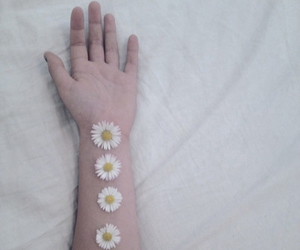 flowers, hand, and daisy image
