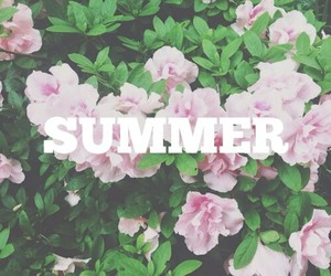 flowers, summer, and pink image