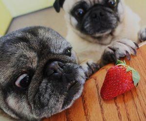 animals, pets, and pugs image