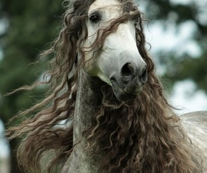 horse, animal, and hair image