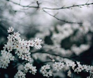 flowers, cherry tree, and indie image