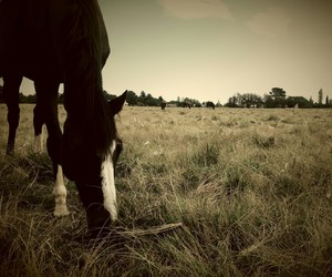equestrian, grazing, and herd image