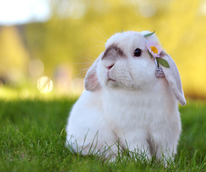 bunny, flowers, and lop image