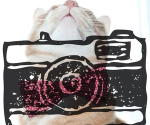 cat, cool, and cute image