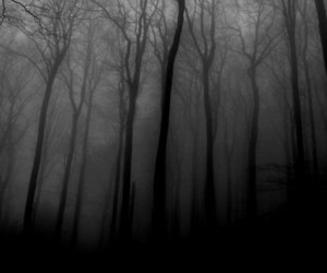 black and white, tree, and forest image